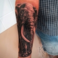 ELEPHANT _ TATTOO BY CYRIL PERRIOLLAT